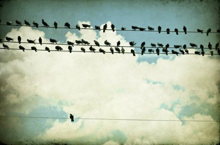 birds-of-a-feather